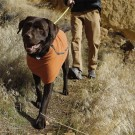 Ruffwear Climate Changer™ dekken, orange thumbnail